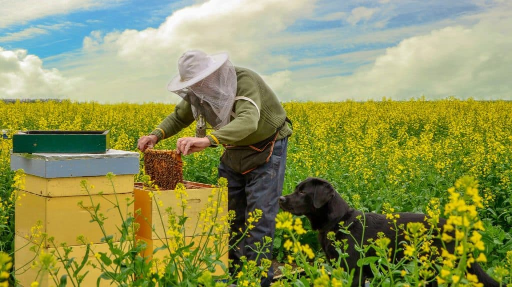 how to become a beekeeper - Honest Beekeeper