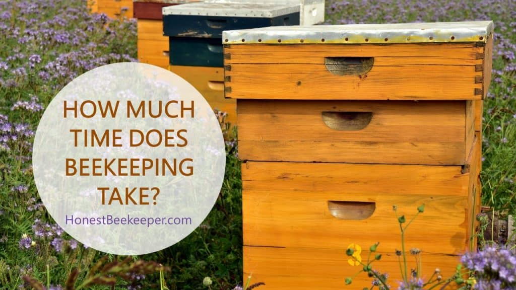 How Much Honey Does A Bee Hive Produce Per Year?