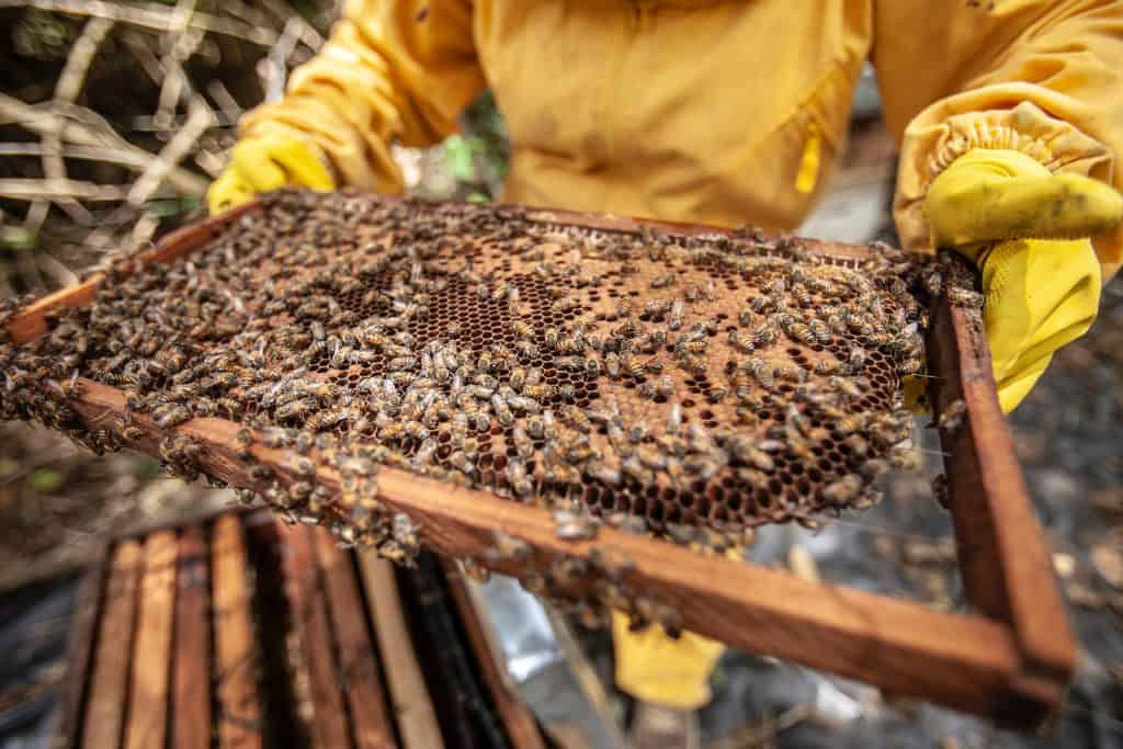 How Long To Spin A Honey Extractor