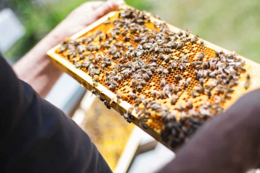 How many honey supers per hive should I have