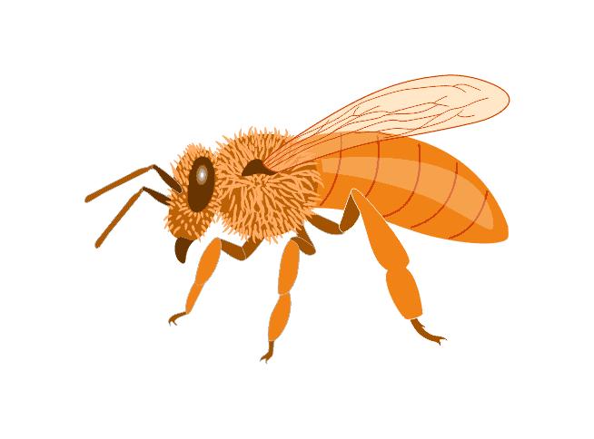 Cordovan Honey bee