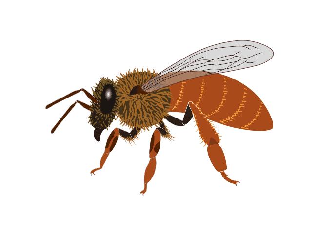 Midnite Honey Bee