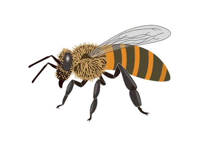 Minnesota Hygenic Honey Bee