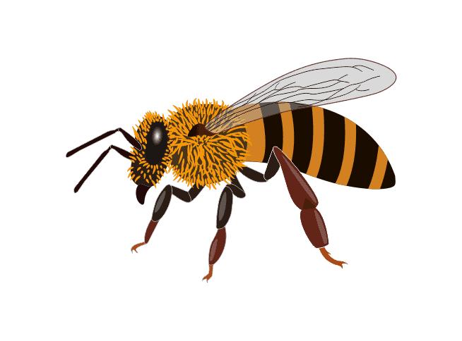 Starline Honey bee